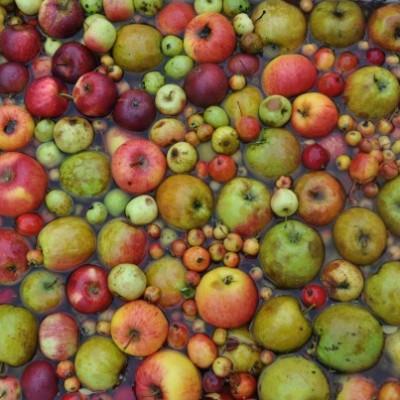 apple0-608x403