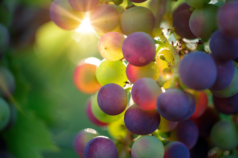 grapes-3550733